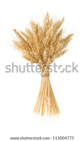 ears of barley  isolated on white background - stock photo