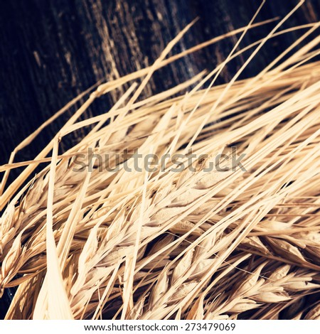 Ears of barley on wooden background. Used for brewing beer - stock photo