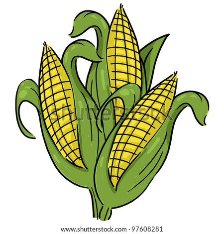 Ears of corn illustration; Isolated corn on a white background - stock photo