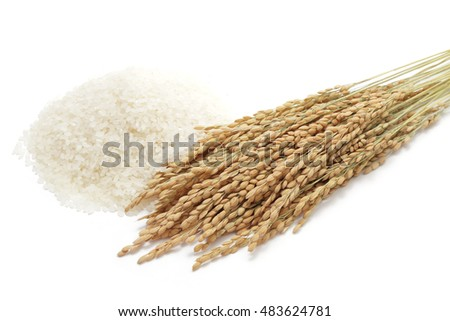 Ears of rice with white rice on white background