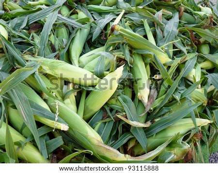 Ears of sweet corn at farmers' market - stock photo