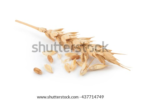 Ears of wheat - stock photo