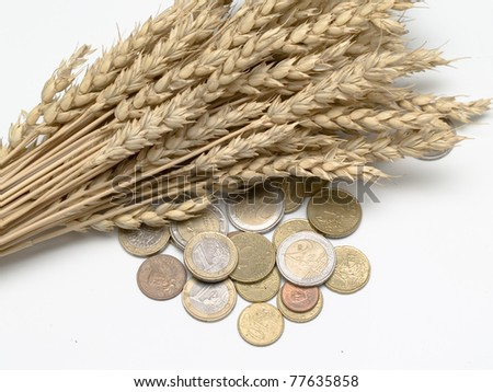 ears of wheat and euro coins on white