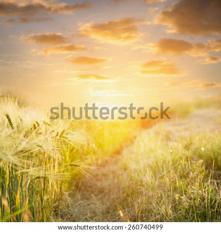 Ears of wheat at sunset against  beautiful sky , nature background, selective focus - stock photo