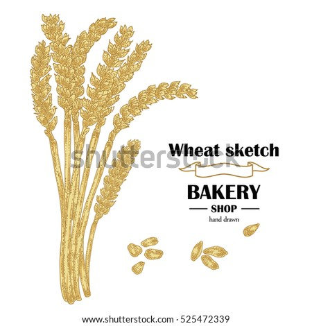 Ears of wheat. Hand drawn cereal. Bakery illustration
