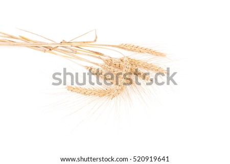 ears of wheat isolated on white background