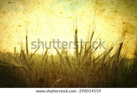 Ears of wheat on a grunge background - stock photo