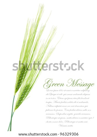 Ears of young green wheat. File contains clipping path for separate spica - stock photo