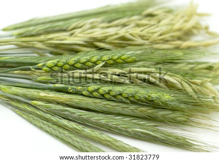 Ears - rye, wheat and  isolated on white background - stock photo