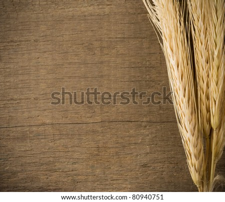 ears spike on wood texture background - stock photo
