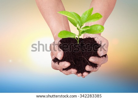 Earth conserve concept with hands carrying green tree over cracked land and sky clouds background golden heaven light Hope concept abstract blurred background from nature - stock photo
