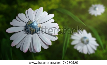 Earth Daisy - stock photo
