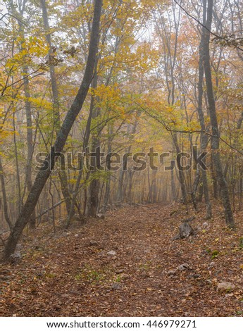 Earth road in Crimean beech-wood forest at misty day at fall season