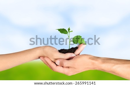 Earth. Trees in human hands - stock photo