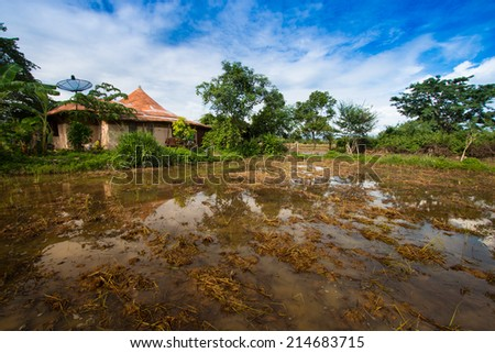earthen house in the rice field - stock photo