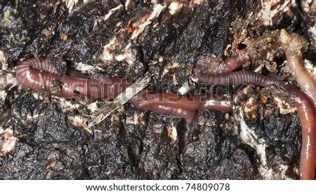 Earthworms in mould, macro photo