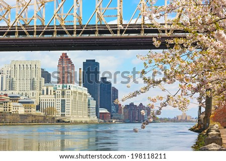 East River, Manhattan and Queensborough Bridge during cherry blossom. Beautiful spring morning on Roosevelt Island, New York. - stock photo