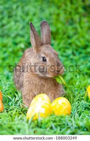 Easter - stock photo