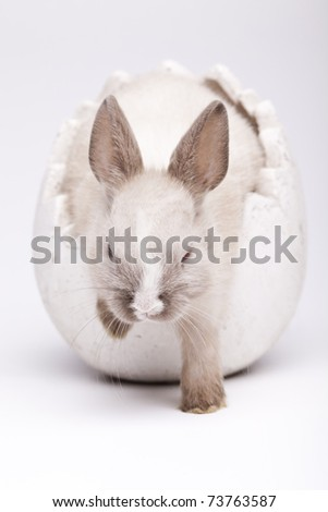 Easter animal, Baby bunny - stock photo