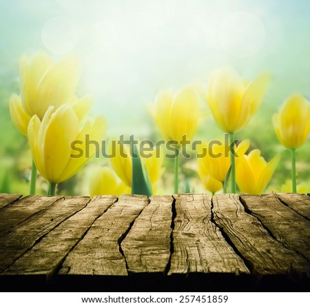Easter background with tabletop. Spring Flowers background. Wood table with tulips - stock photo