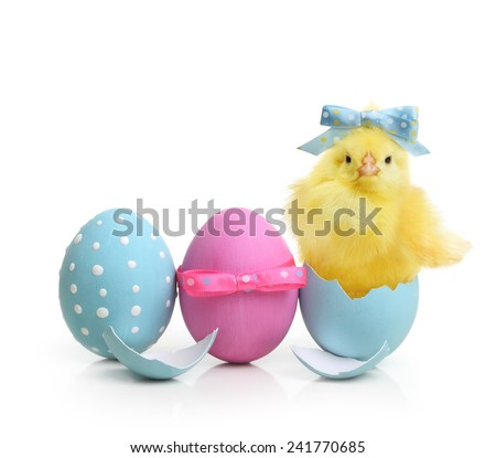 Easter blue and pink eggs and cute little chicken isolated on white background - stock photo