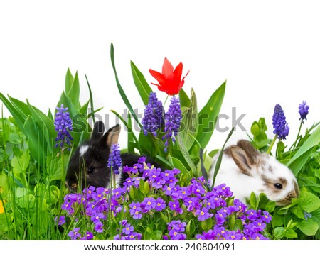Easter bunnies, hiding, flowers, isolated
