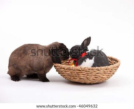 Easter bunnies isolated on white background.
