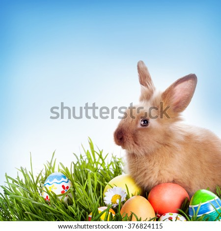Easter bunny and Easter eggs on green grass  - stock photo