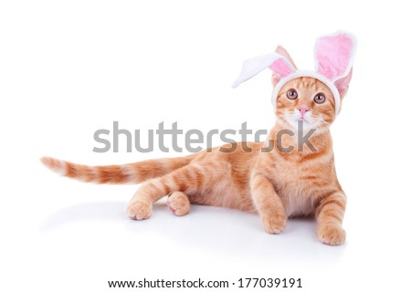 Easter bunny cat in bunny ears isolated on white - stock photo