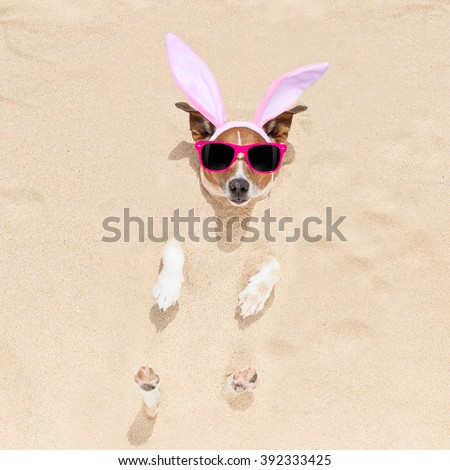easter bunny ears jack russell dog , at the beach buried in sand , on spring easter holidays - stock photo