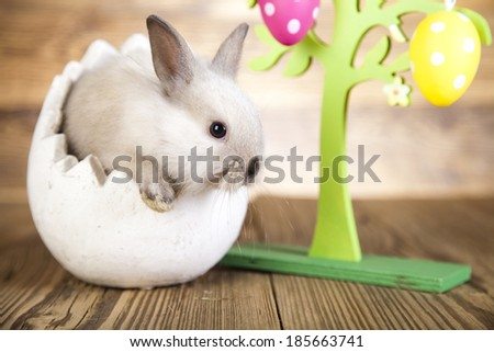 Easter bunny, Easter eggs,  - stock photo