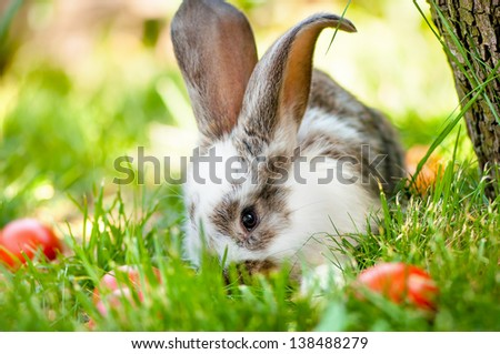 Easter bunny eating grass and playing between colorful eggs and green background. Easter Wallpaper - stock photo