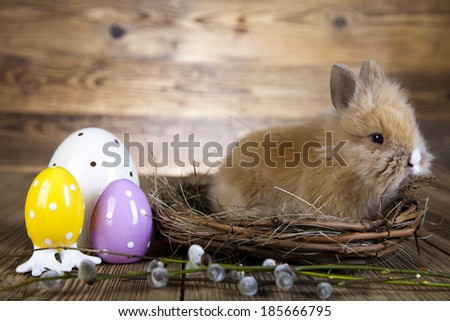 Easter bunny in a basket, egg, based  - stock photo