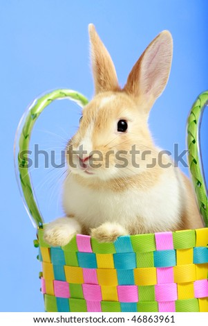Easter bunny in a basket, on blue background - stock photo