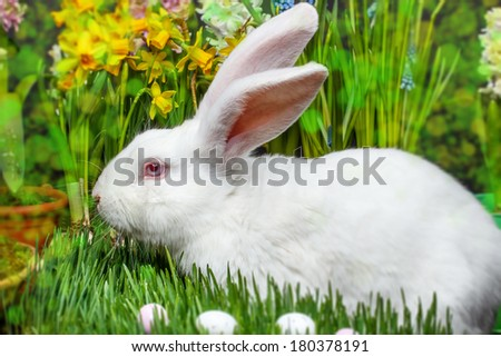 Easter bunny in garden, flower in background