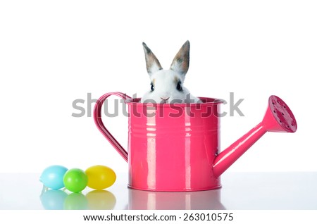 Easter bunny whit eggs and pink watering cans.
