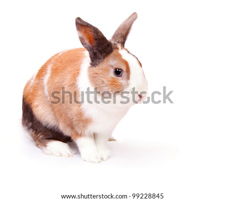 Easter bunny with a white fluffy wool with ginger spots isolated on white background - stock photo