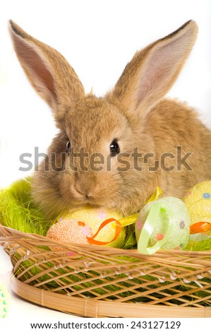 Easter bunny with basket and colored eggs - stock photo