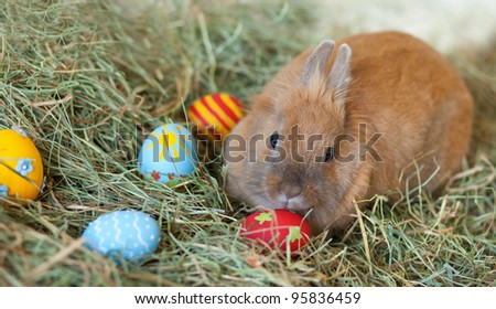 Easter bunny with colorful painted eggs in hay