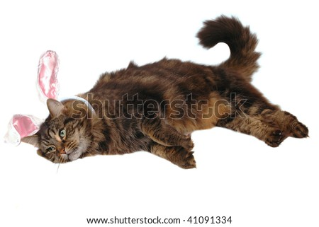 easter cat - stock photo