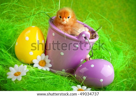 easter chick - stock photo
