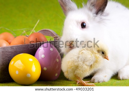 easter chick and bunny - stock photo