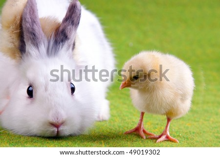 Easter chick and bunny rabbit - stock photo