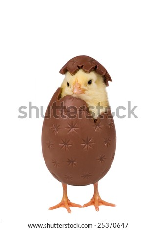 Easter chick coming out of a chocolate egg - stock photo