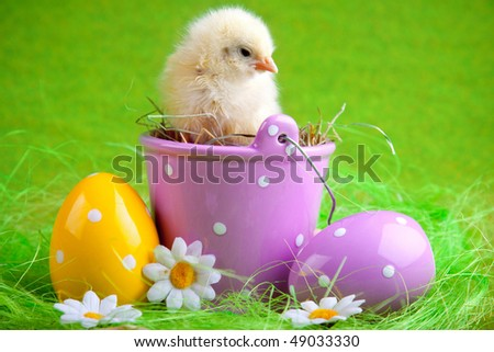 easter chick sitting in bucket - stock photo