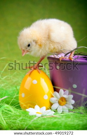 Easter chick walking out from bucket - stock photo