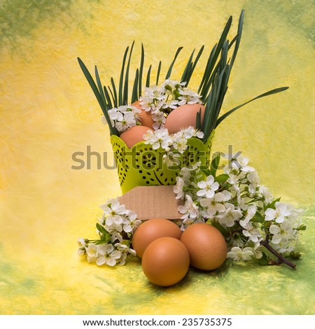 Easter concept.Chicken eggs and spring white blossoms with place for text. - stock photo