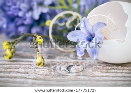 Easter decorations, closeup on hyacinth blossom in broken egg shell on natural background - stock photo