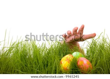 Easter egg hunt. Kids hand and easter eggs hidden in fresh green grass. Isolated on white background - stock photo
