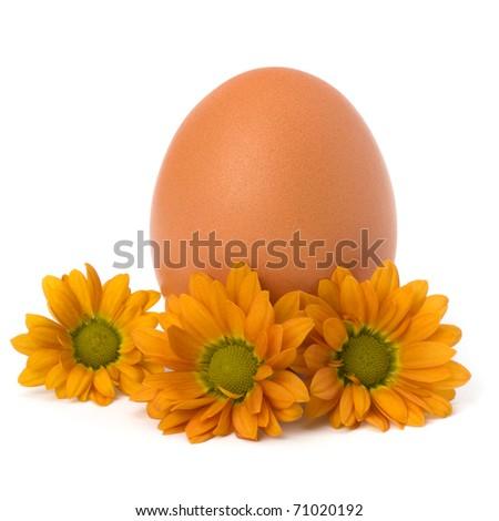 Easter egg  isolated on white background - stock photo